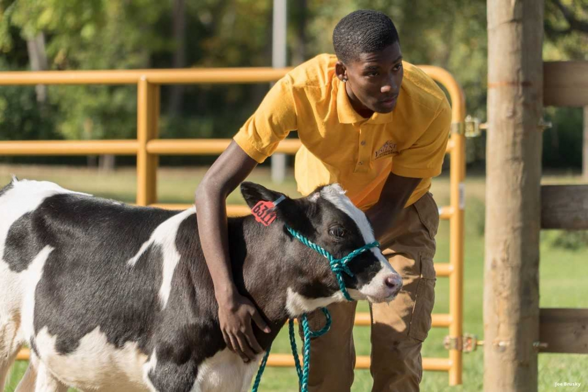student with calf