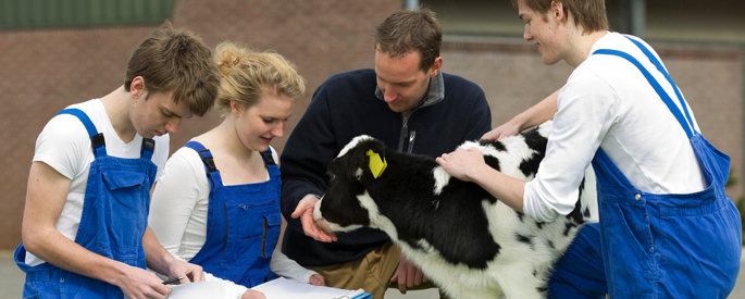 Students and instructor with Holstein calf