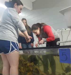 Students working with fish