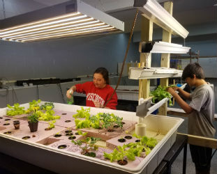 Students working on the grow bed